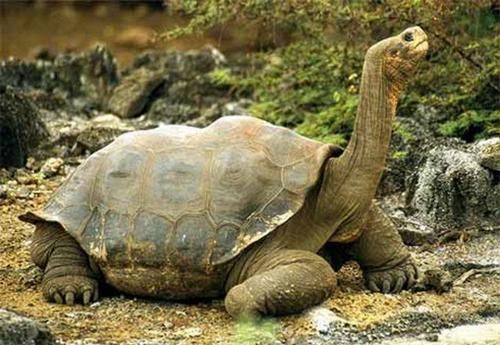 Breshka me e madhe ne bote