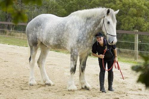 Kali me i madh ne bote