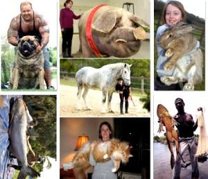 kafshet me te medha ne bote