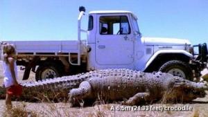krokodili me e madh ne bote