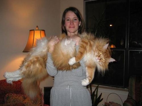 macja me e madhe ne bote