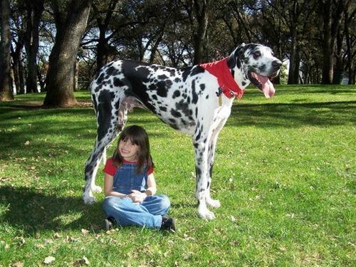 qeni me e madh ne bote