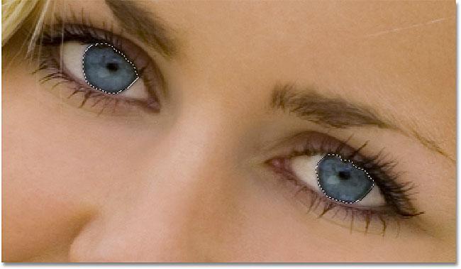 syte e selektuar