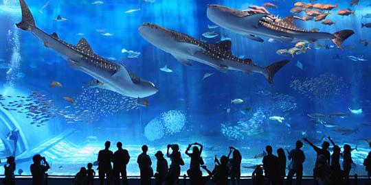 Aquariumi Churaumi