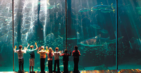 Cape-Town-Two-Oceans-Aquarium