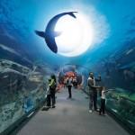 Il Dubai Aquarium negli Emirati Arabi