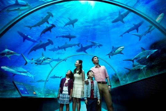 Shark Seas